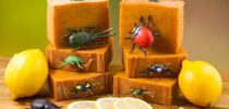 Bombardier Beetle Soap