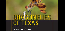 A field guide to the dragonflies of Texas